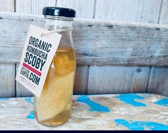 Organic Kombucha Scoby