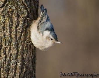 "Set of 10 postcards ""The Nuthatch""."