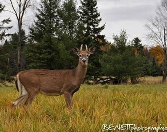 Photography: Young deer at the toes