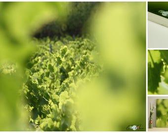 Photo field strains