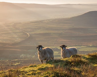 Ribblehead Viaduct and sheep from Whernside Yorkshire Dales Three Peaks A4 Print