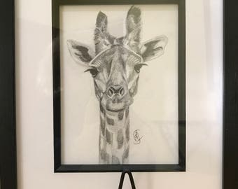 Original A4 pencil drawing of Giraffe.