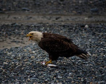 """The eagle and its prey. (16x20"""" Canvas print)"""
