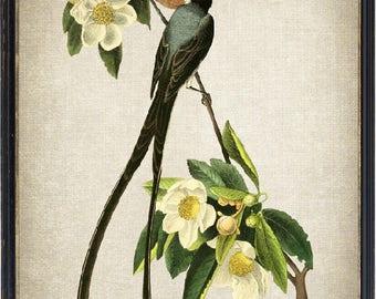 Vintage Art Bird and Botanical Print, Fork-tailed Flycatcher Bird Illustration, Instant Download Printable