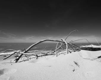 Canvas Print, Lake Michigan, Black and White, Beach, Landscape Photography