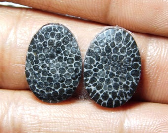 Pair ! Black Fossil coral Cabochons 100%Natural Black Fossil coral top quality Gemstone Black Fossil coral Loose stone 14.05cts.(17x12x3)mm