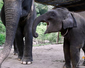 Elephant Sanctuary Print 2