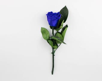 Blue Long Stem Roses, Forever Roses,Real Preserved Blue Rose,Eternity roses that last a year,Beauty and the beast rose,Real Blue Roses