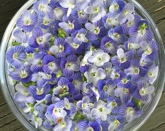 Speedwell Flower Essence / New Moon Beginnings / Solar Eclipse / Vibrational Healing / Vibrational Medicine Remedy / Pisces Gifts