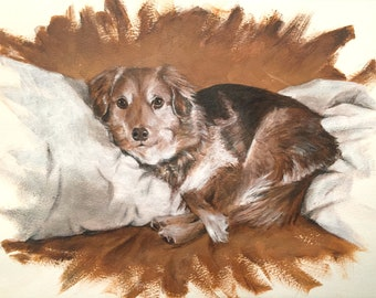 Dog lying on Brown background