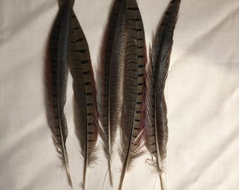"""Pheasant Feathers 8""""-10"""""""