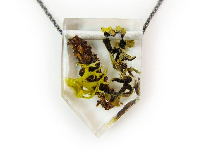 Terrarium and Resin Necklace • Nature Necklace • Eco Resin Pendant • Terrarium Jewelry • Moss Jewelry • Science Jewelry • Botanical Jewelry