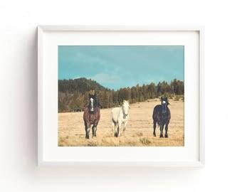 "large landscape photography, equine wall art prints, large colorful landscape art, horse photography, colorful landscape photograph - ""Team"""