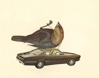 Cowbirds will be contended with on a case by case basis. Original collage by Vivienne Strauss.