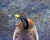 Duck photo, duck wall art, duck print, bird photo, bird print, duck photo, bird art, abstract duck print, abstract duck photo, duck art