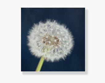 Dandelion photo canvas wall art, nature photo, navy blue, white,  dandelion wall art, nursery wall art, canvas gallery wrap - A Dandy Wish