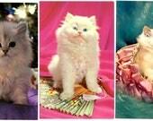 PLASTICHROME CAT POSTCARDS Trio of 3 Kitties 1950s