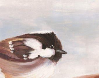 Coal Tit Print - Garden Bird Nature Reproduction from Original Oil Painting - 8x10 - SLIGHT SECOND