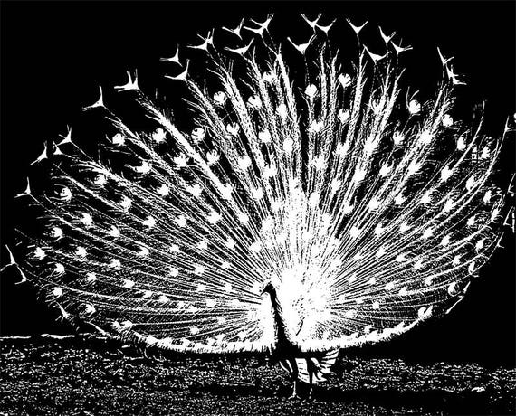 """white peacock bird printable art abstract black and white illustration Digital images animal Download ink style 8.5"""" x 10.5"""""""