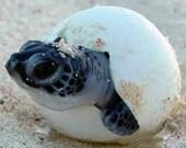 Custom listing for Megan Ellars-sea turtle hatchling-painted rocks-rockartiste