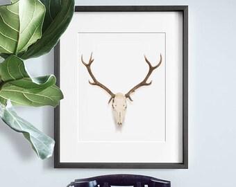 Deer Skull PRINTABLE, mount, minimalist wall art, mounted antlers, urban outfitters, dorm decor, Urban Outfitters, Stag, Scandinavian Elk