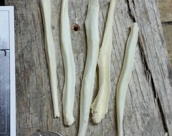 Canine Bacula Bones- 5 Baculum- Coyote Fox Real Bones- Lot No. 170610-TT