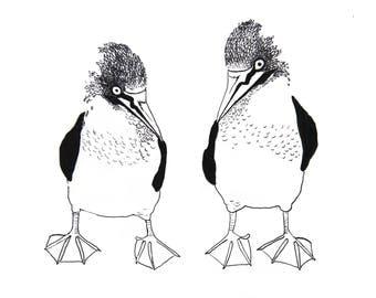minimalist watercolor print: Asymmetrical Boobies