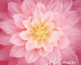 Wild Rose - Dream Big