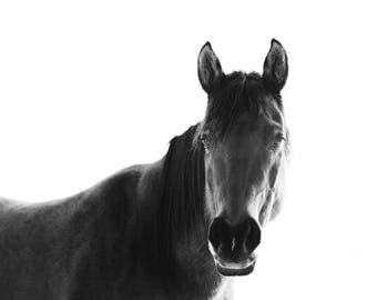 Horse with White Background, Black and White Horse Photography, Physical Print, Farmhouse Wall Art
