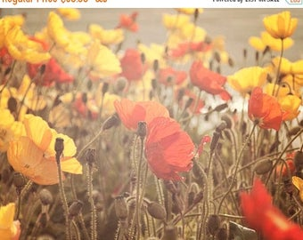 """SALE Boho Wall Art, Rustic Floral Photography, Poppy Flowers, Red Yellow Brown Beige , Soft Sunlight, """"Fading Beauty"""""""