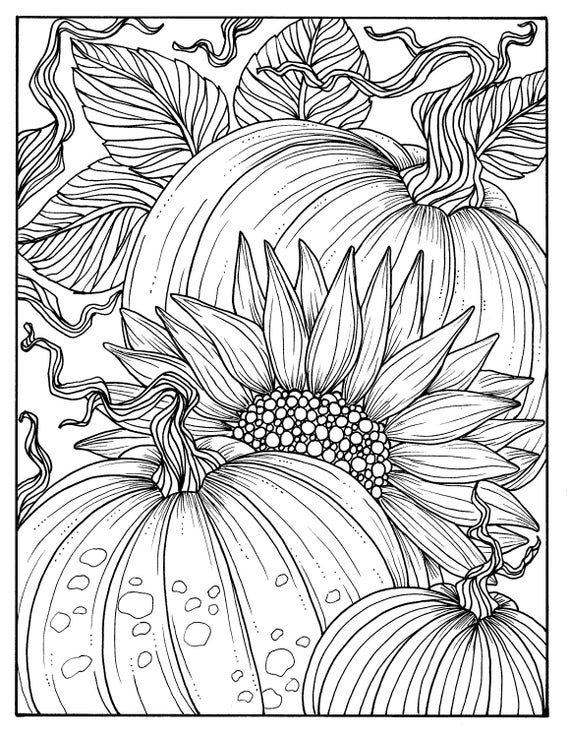 pumpkins and sunflower digital coloring page fall adult coloring digi stamp thanksgiving - Digital Coloring Book