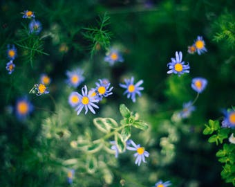 Blue and Yellow Flowers - Fine Art Photograph, Flowers, Garden, Spring, Nature
