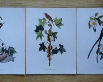 Audubon Bird Prints, 3 Bird Wall Hangings, Original Large Audubon Flycatchers & Sapsucker Book Prints