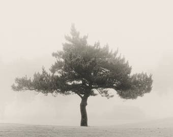 tree photography, landscape photography, black and white photography, trees, photography, trees in fog, fog photography, sepia photography