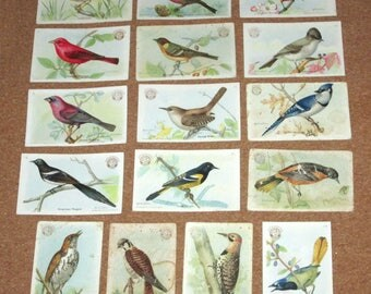 Vintage BIRD Cards by Arm and Hammer Church and Dwight Collectible Cards