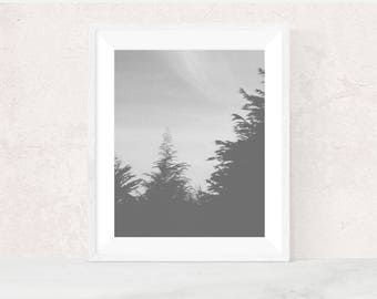 Digital download | GHOSTS | surreal art print | nature photography | rustic home decor | foggy landscape | woodland art print | trees art