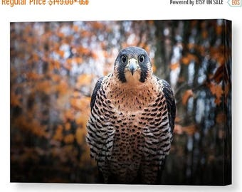 ON SALE Peregrine Falcon Gallery Wrapped Canvas, Raptor Wall Art, Bird of Prey Nature Photography, Ready to Hang, Unique Home and Office Dec
