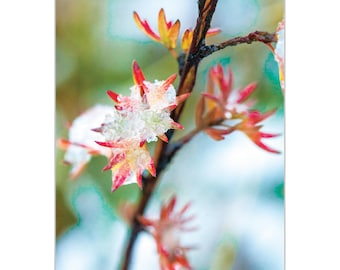 Nature Photography 'Icy Autumn' by Meirav Levy - Winter Blossom Art Contemporary Nature Decor on Metal or Plexiglass