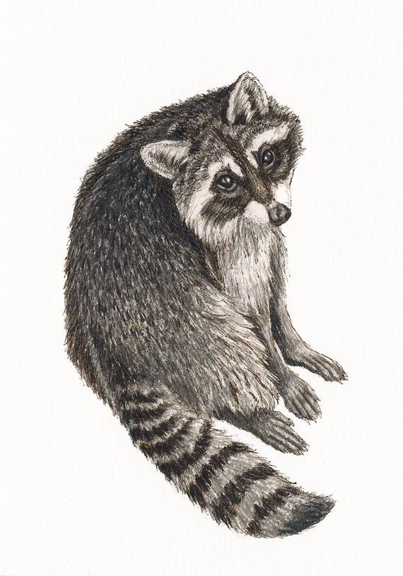 "Raccoon - Print of Original Art 5"" x 7"" watercolor and ink Giclee archival"