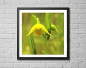 flower photography print ...