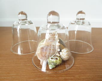 Three small glass cloches or display domes for terrariums, display or crafts