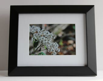 "5""x7"" Original nature photo includes mat and frame measuring 10""x12"""