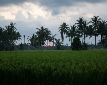 Bali Sunset Over the Fields - Bali, Indonesia -  Tropical Landscape 8x10 to 24x36 Art Prints