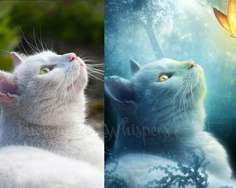 personalized pet art photo manipulation commisioned work