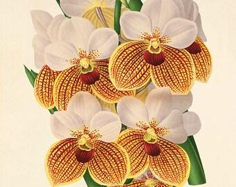 Yellow Orchid art print Botanical Art Prints Vintage Victorian art print Garden Wall Art flowers antique prints antique flower art print