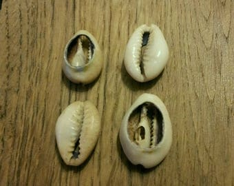 "SET OF 10 COFFEE BEANS ""COWRIE"" SHELLS"