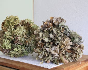 2 Dried Hydrangea Flowers  Bouquets Primitives, rustic , anrtik , creamy , cottage decoration, dried flowers, getrockene blumen