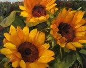 "Warm Embrace, 10"" x 10"", inches, original, oil, painting, wall, decor, art, krista eaton, garden, sunflowers, sunflower"