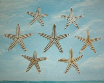 """Lot of 7 petite, small Juvenile Lined 2"""" SEA STAR, Starfish from FLORIDA Beach"""