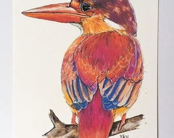 Wall art pink Kingfisher painting bird print nature art Australian sellers beautiful